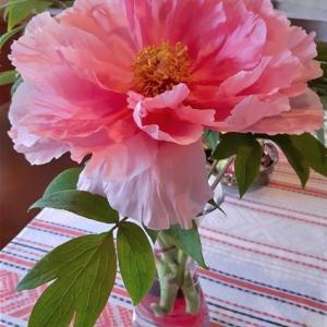 ・ ルイーザ・Luisaの花の写真と、ヴィットーリオ・Vittorioの絵