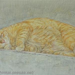・ トスカーナの猫 描き始め と、 可笑しな可愛い動物たち