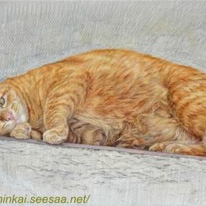 ・ トスカーナの猫 途中経過と、 手作り簡単クリスマスのデコレーション