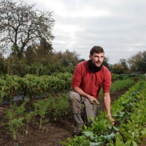 ・ ヴェルサイユ宮殿の 菜園で働く若きイタリア人