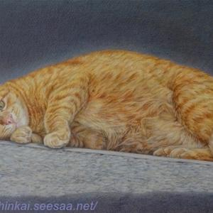 ・ トスカーナの猫 一応仕上げ と、 画材の購入