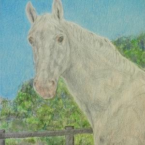 ・ 馬の肖像 描き始めと、  イタリアは夏時間に