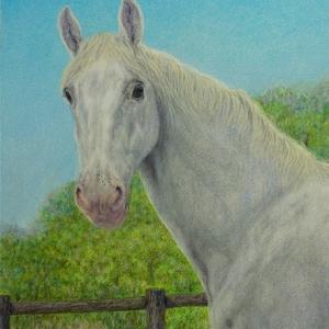 ・ アンナリーザの馬 途中経過と、  世界のあちこちで茶室にお招き