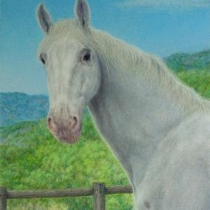 ・ アンアリーザの馬 仕上げと、 105年後、廃船がマングローヴの林に!