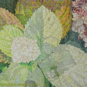 ・ 紫陽花 の描き始めと、 サルデーニャ島の名物、伝統土地料理 10品
