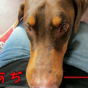 【犬好きの方へ】甘えすぎやろ (^_^;)