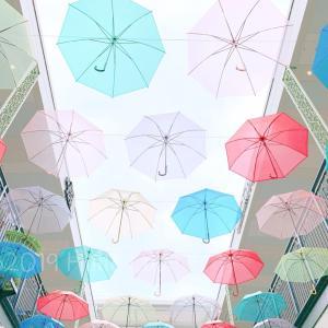 雨の日に咲く