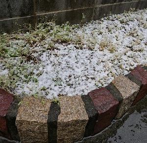 雪だ~ヾ(*´∀`*)ノ