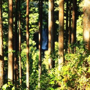 涼風滝めぐり29 仁淀ブルーの絶景「にこ淵」