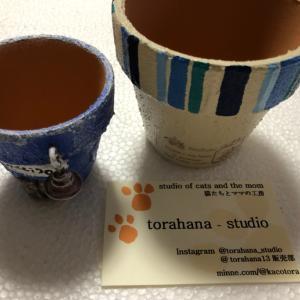 ☆Toraharaさんの鉢入手と先日の入手品の内訳☆