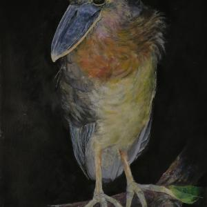 Boat-billed Heron oil paint ハシビロサギ 油彩
