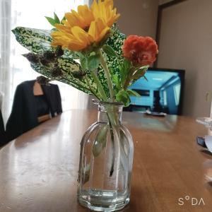 綺麗なお花が届きました(*^^*)