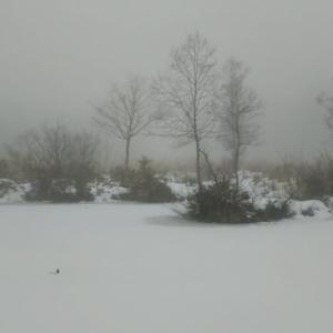 今年初めて見る雪景色