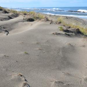 新潟の海岸における飛砂問題
