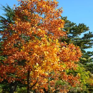 身近な公園で秋を感じる
