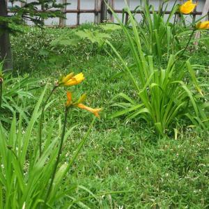 今日は庭で高原気分