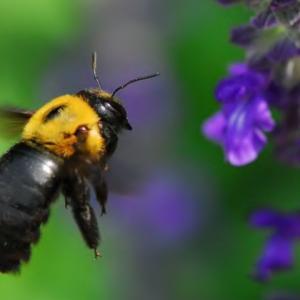クマバチはなぜ飛べるのか?→勘違いしてるから