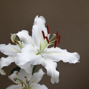 ユリの女王〈カサブランカ〉が咲きました~(*´▽`)