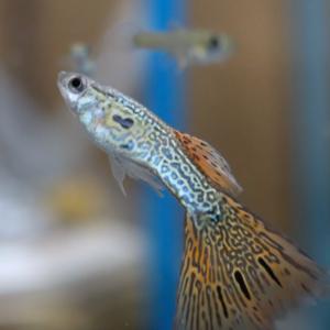 熱帯魚&海水魚】入荷情報です。