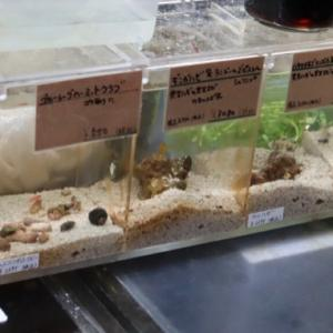 海水魚】小型水槽の住人たち。