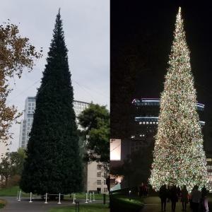 クリスマスツリー サウス・コースト・プラザ