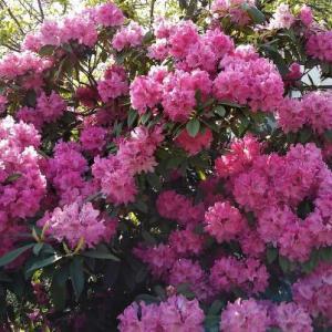 桃の咲くころに桃紅さんを送る・・・