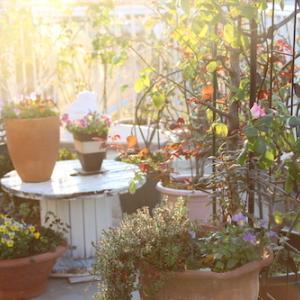 朝日って花たちみんな輝かせるね♫
