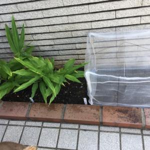 夏休み中にやりたかったこと。映画と小松菜の種まき