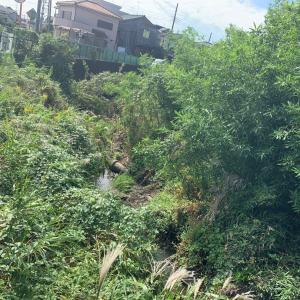 古綾瀬川の荒れたヨシを地元の東間県議を通して除去して頂きました