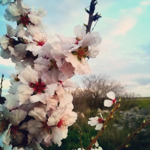 プーリアは春日和&イタリア人の美しさ