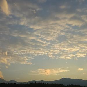 秋桜(コスモス)を、さだまさし・バージョンで、歌ってみました‼️(^ω^)✌️2020 10 12 by 明日嫁ぐ宮ちゃん