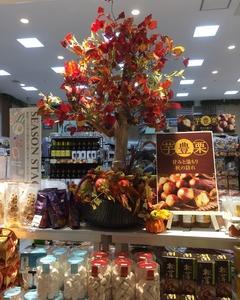 秋の味覚 楽しむ季節がやっとやってきた!