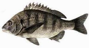 チヌ釣りに関して最新情報