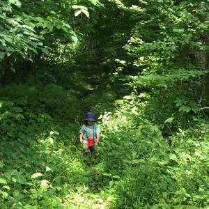 森林浴とお着物
