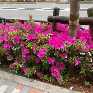 花の季節とお散歩