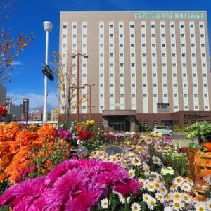 北見駅周辺★2021年10月16日~24日まで「菊を展示しています。」★