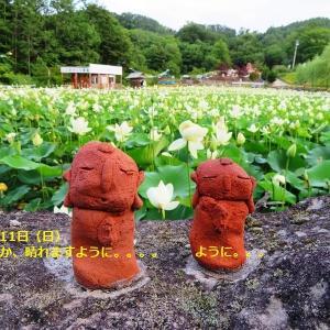 2019年8月11日、晴れてください!!「日本最北のハス池」で【はすまつり】