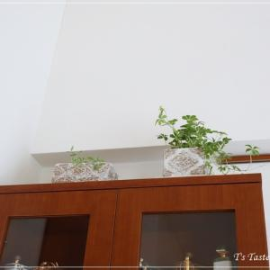 増える植物とアクセサリーセールのお知らせ