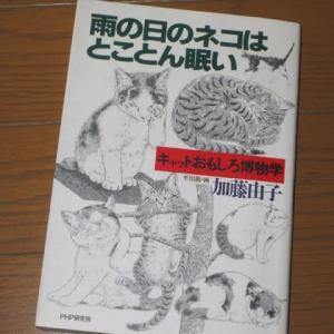 加藤由子さんの本『雨の日のネコはとことん眠い』