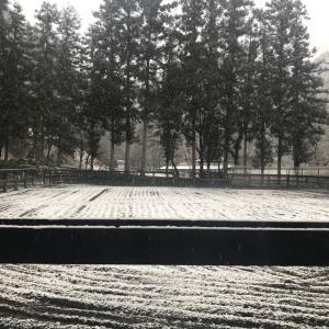 雪がきましたよ