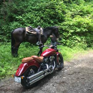 朝はバイクで乗馬に行く