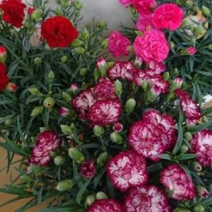 花鉢いろいろ