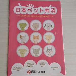 日本ペット共済の補償・プラン内容と実際の口コミ、評判から徹底評価!