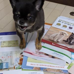 【全15社+αを完全網羅】犬・猫のペット保険はどこがいい?安さと補償内容で差がつく選び方完全ガイド