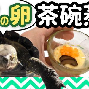クサガメの卵で作った茶碗蒸し