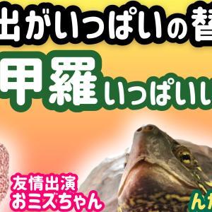 【替え歌】重い甲羅いっぱいいっぱい