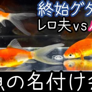 金魚の名付け会議!