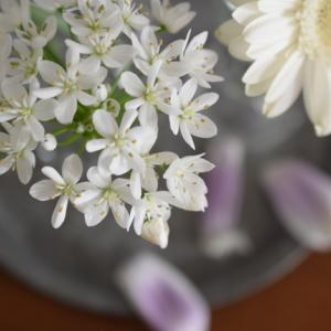 フォト*落ちたチューリップの花びら