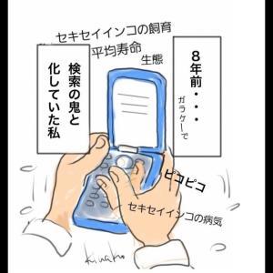 4月30日 ぴーちゃんお迎え記念日