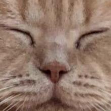 〇〇な寝相…様々な『寝てるネコ』のTwitter報告が面白い!